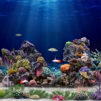 Amazing Aquarium 3D HiQ Dynamic Theme Box Art