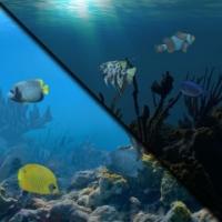 Aquarium: Nexus Dynamic Theme Box Art